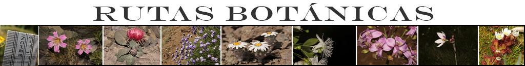 Rutas Botánicas